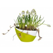 Selfwatering pot Doppio Spring for flowers and herbs
