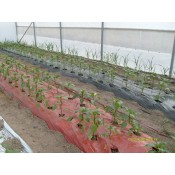Brown/Red Mulch film 25 mic