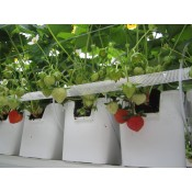 Meteor Systems Strawberry Pots