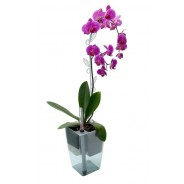 Selfwatering pot Mimosa for Orchids 15 cm